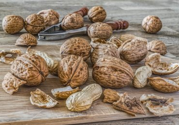 Areas of Use of the Walnut
